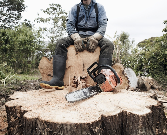 Suspended for Cutting Trees During Tree-Cutting Class