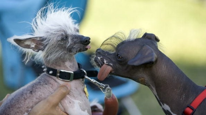 World's Ugliest Dog: Enter Now