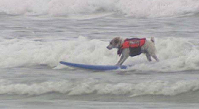 Surfing Dogs Show Passion, Trust