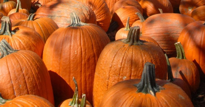 Pomona Pumpkin Festival: 25th Year