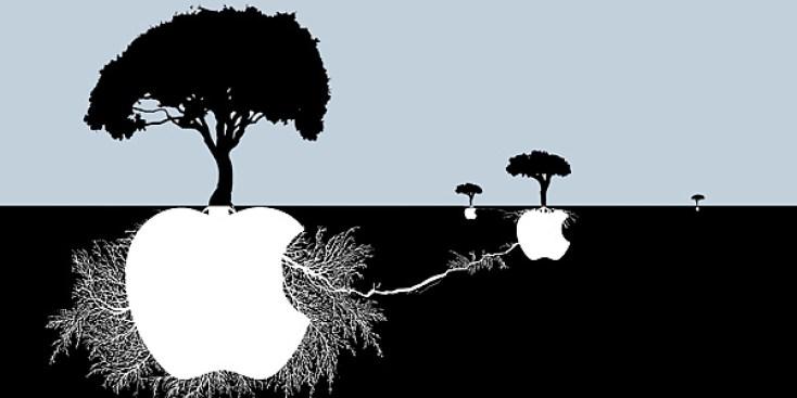 iCaramba! Apple's Long, Awesome Year