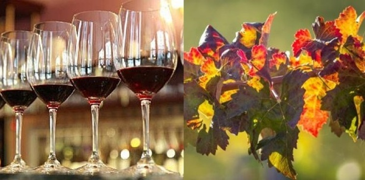 SIP Passport: Temecula Valley Autumn