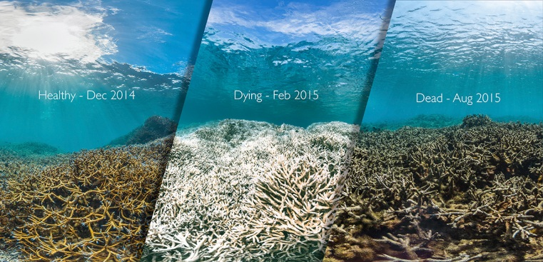 [NATL] Reefs in Ruin: Coral Bleaching Around the World