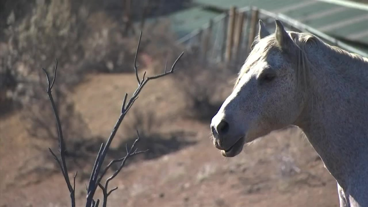 Donovan the horse is pictured at a rescue ranch in Malibu.