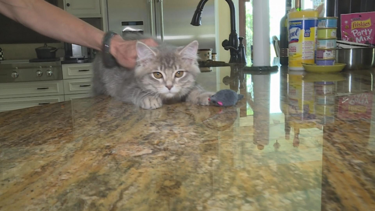 Couple Clones 19-Year-Old Cat for $25,000