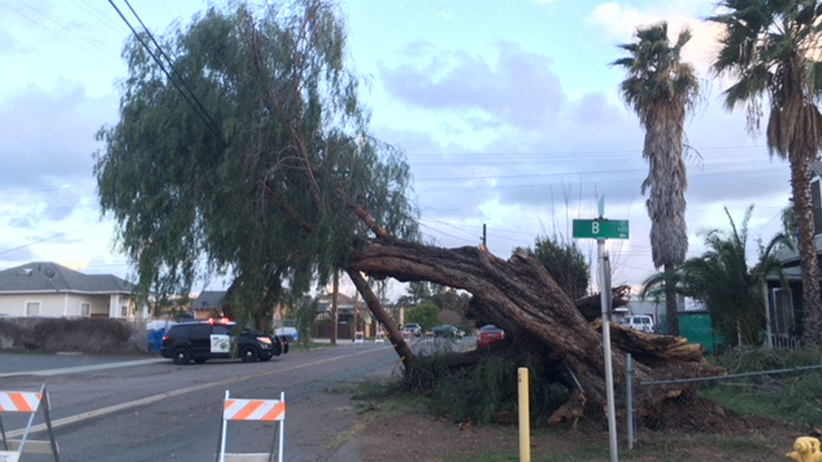 High winds knocked over a nearly 100-year-old tree in Ramon on Feb. 19, 2018.