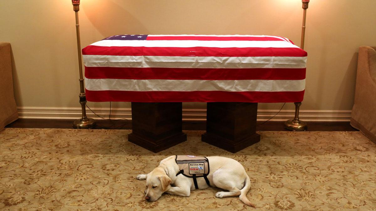 Sully, former President George H.W. Bush's service dog, on Sunday, Dec. 2, 2018.