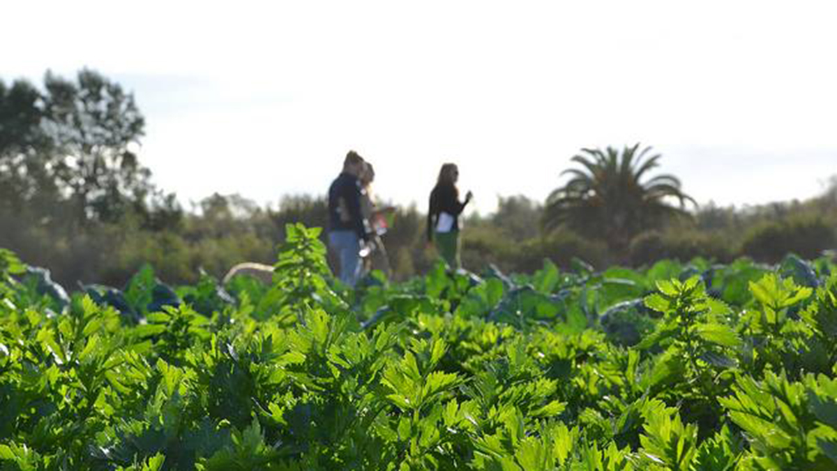 Suzie's Farm, an organic farm in San Diego's Tijuana River Valley, is shuttering after eight years in business.