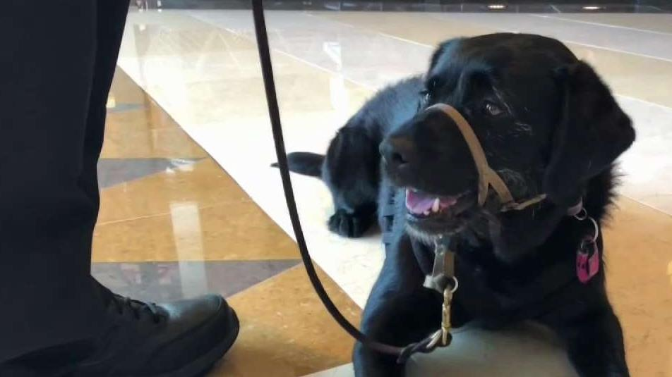 Program Helps Military Vets With Service Dogs Find Jobs