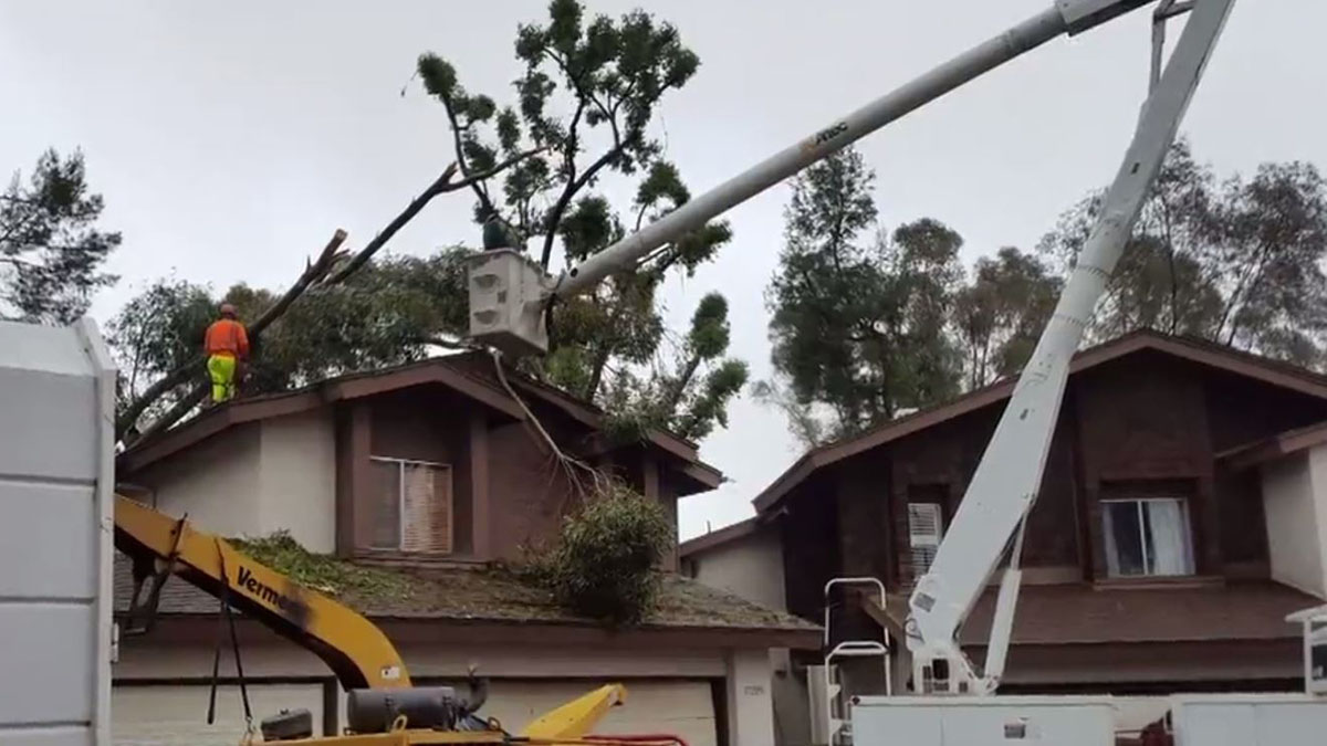 A tree struck down by Friday's storm toppled over two town houses in Scripps Ranch.