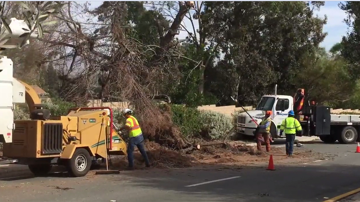 Strong winds toppled a tree along Rancho Bernardo Road on Nov. 13 and crews spent the morning cleaning up the mess.