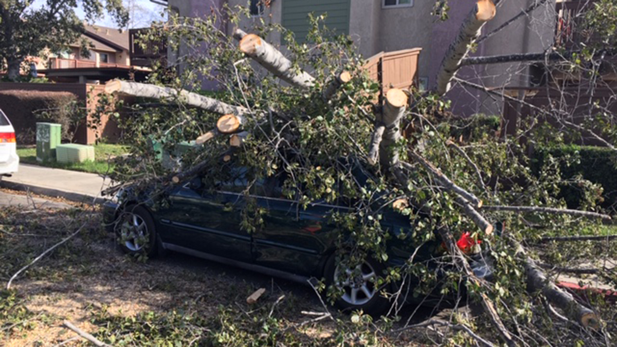 Strong winds toppled a tree on West Lake Drive in San Marcos on Nov. 13, amid dangerous fire weather conditions