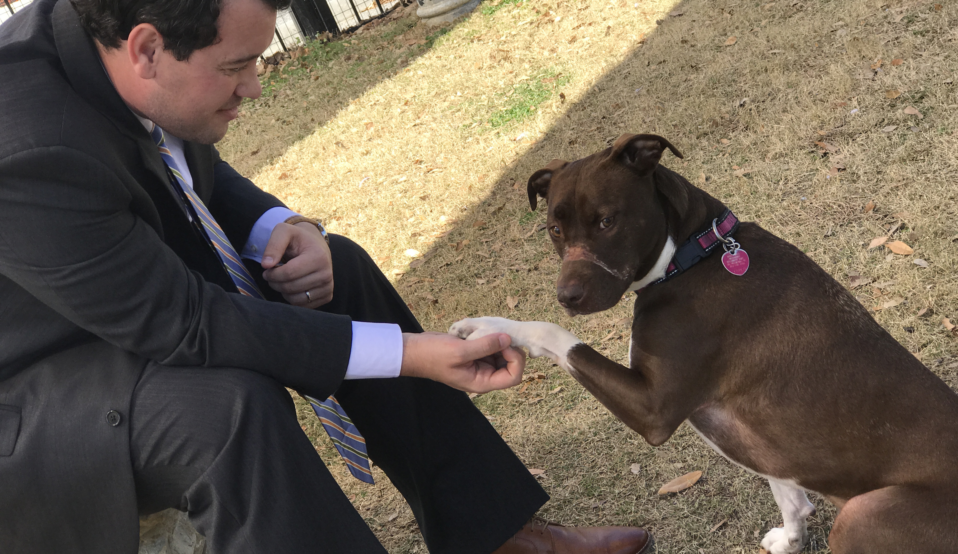 Caitlyn, a dog whose snout was once wrapped with electrical tape captured in gruesome photos, was healing well as her abuser was sentenced to prison in South Carolina Friday. (Published March 27, 2017.)