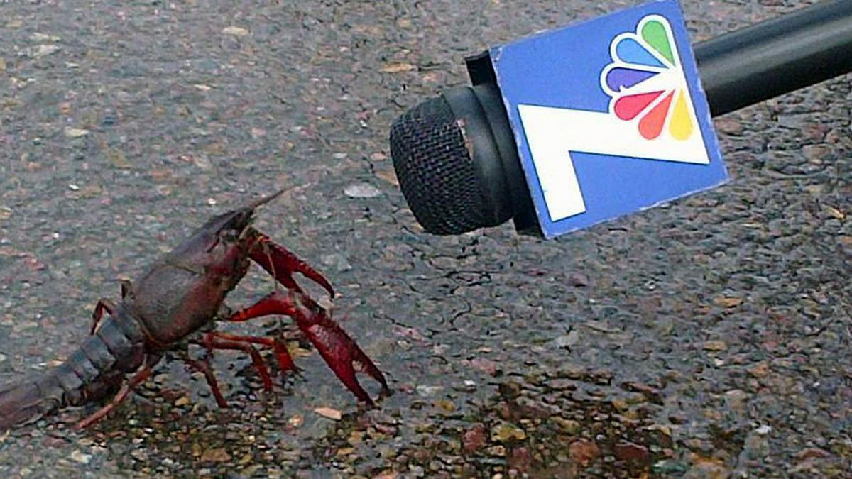 NBC 7's 'Crawfish Interview' Pic Resurfaces as Internet Meme