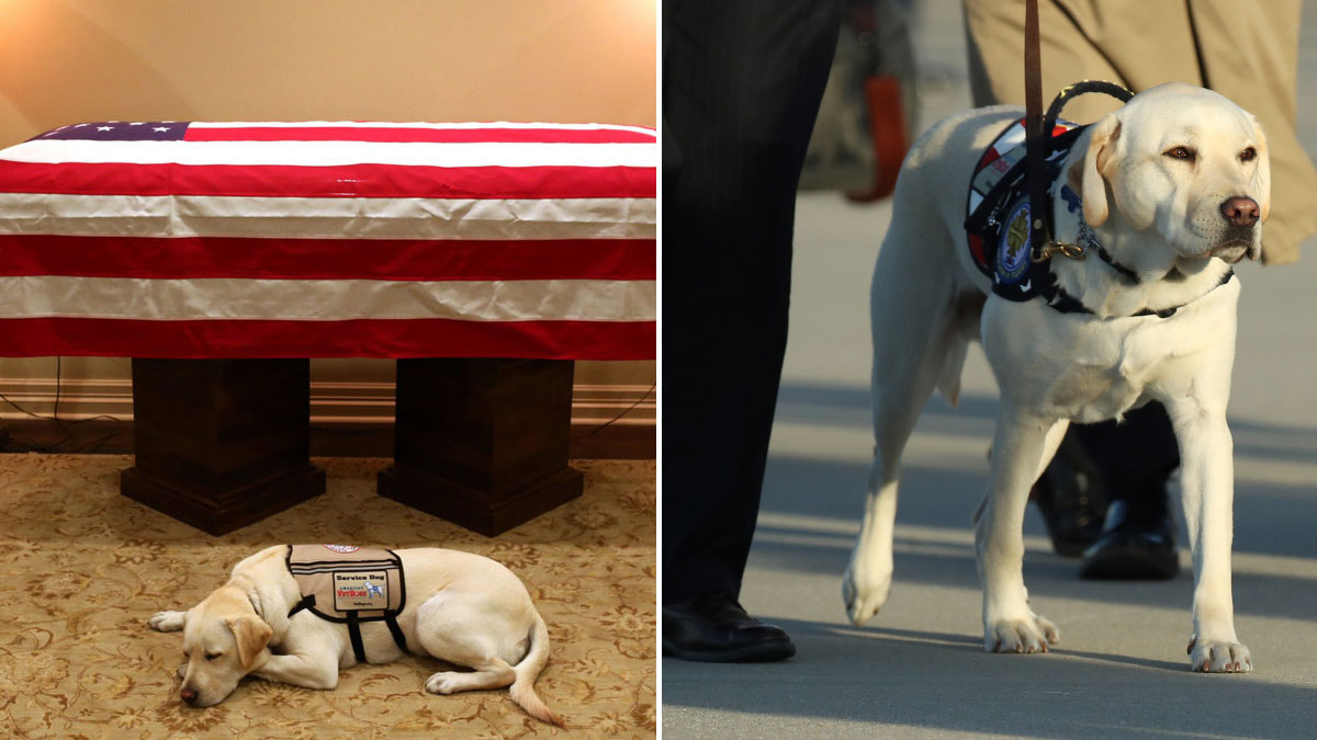 Sully, former President George H.W. Bush's service dog, is seen at left beside his casket on Sunday, Dec. 2, 2018, and at right on Monday at Joint Base Andrews outside a presidential plane that brought both to Washington, D.C.